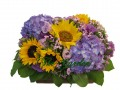 Admire - 5 Sun Flower + Hydrangea
